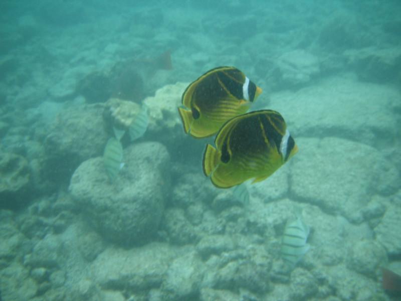 Fish Pair